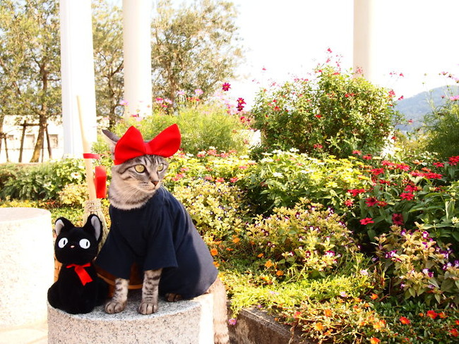 cats-anime-costumes-yagyouneko-japan-5f48f59436699__700