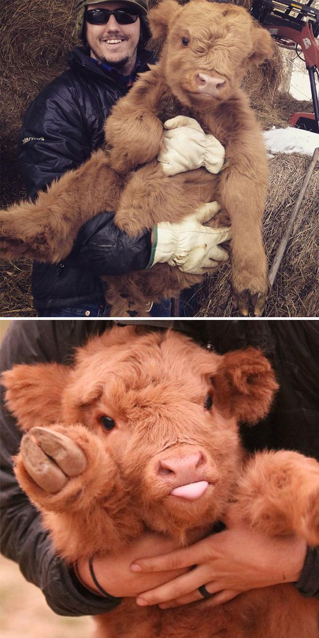 adorable-baby-animals-16-611cf808d5875__700 (1)
