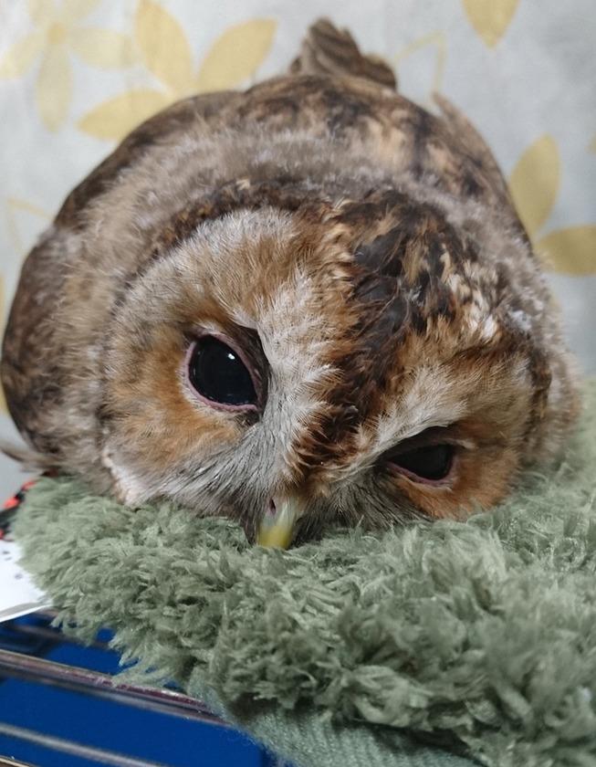 sleeping-baby-owls-face-down-16-5ef2f9f7c03c7__700