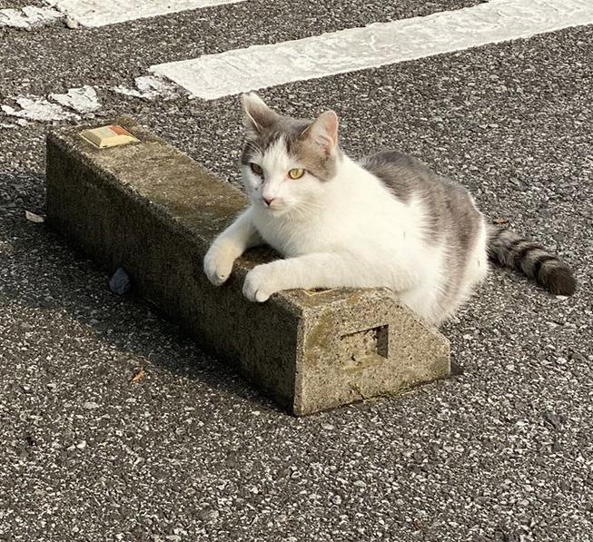 cats-sleeping-parking-lot-curves-5f215b9e2bc99__700