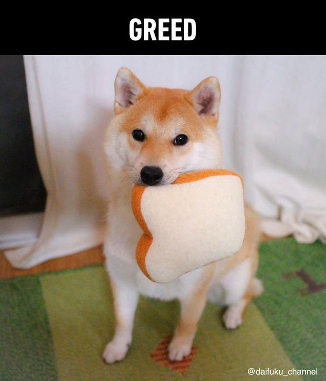 funny-cute-shiba-inu-dog-seven-deadly-sins-5-5a12ad863292d__700