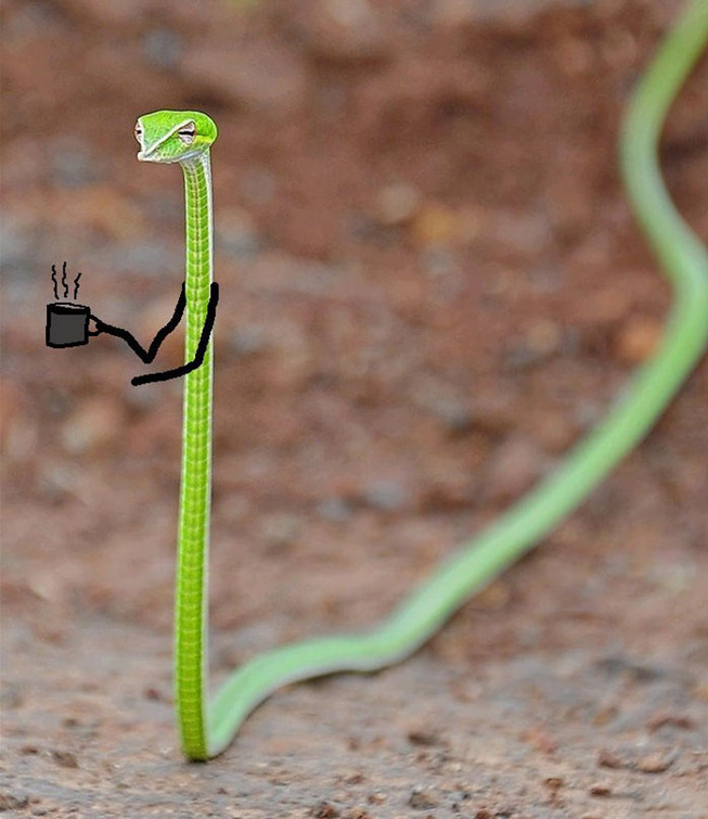 funny-snakes-arms-doodle-36-5d81e0698a987__700