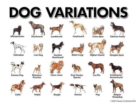 small-dog-breeds-17