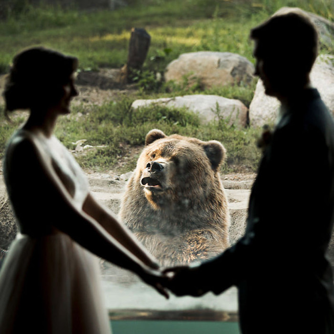 bear-photobombs-wedding2-5b9a064dc6634__700
