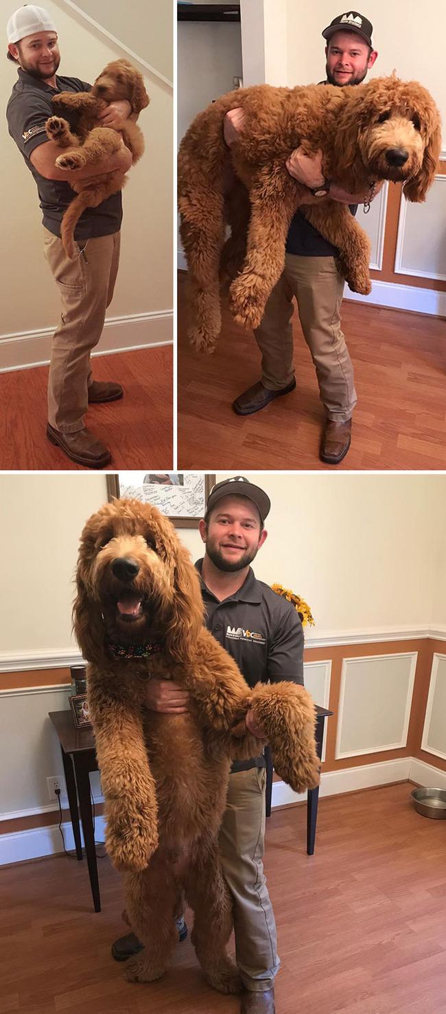 giant-dog-breeds-311-5fb7c0687611a__700
