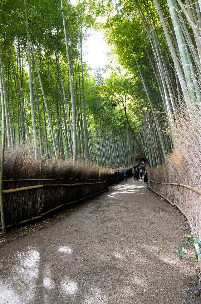 16 - Arashiyama