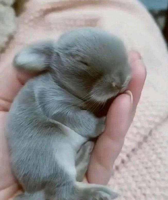 adorable-baby-animals-06-611bb5e3134fa__700