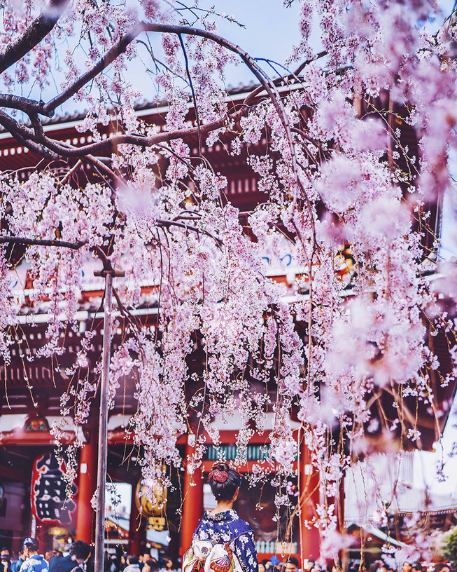 Lost-in-Kyoto-and-the-sakura-blossom-59101a8f9f5d4__880