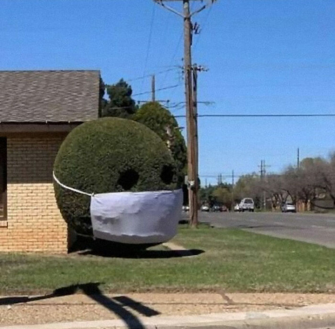 ugly-gardens-pictures-157-61026867c4a0c__700