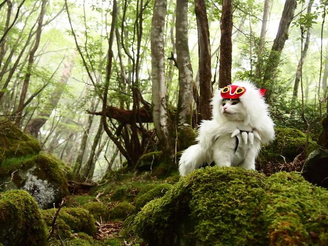 cats-anime-costumes-yagyouneko-7-5f48c14095fb2__700