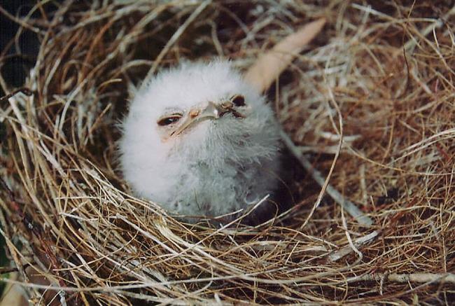frogmouth-birds-cute-babies-pics-6-5f7442e129807__700