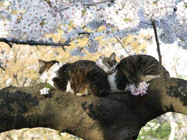 sleeping-cats-in-trees-19-5f118e695eef2__700