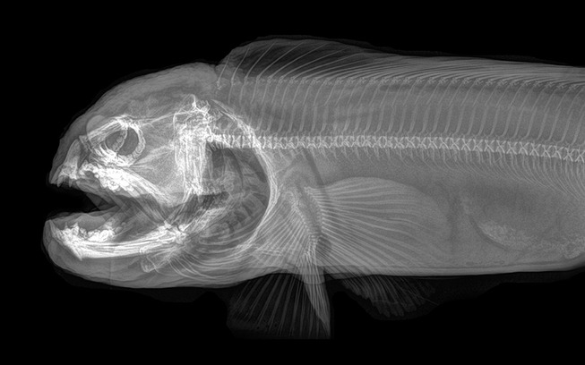 xray-pictures-photos-zoo-animals-oregon-oregonzoo