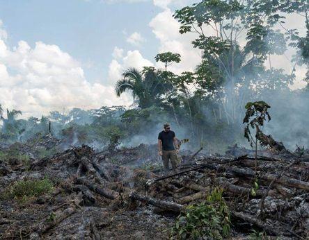 amazon deforestation - header