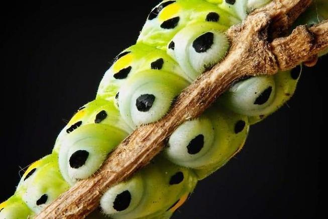 caterpillar-feet-5ef09390f22e0__700