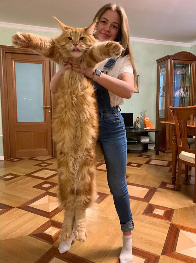 funny-cats-long-tall-1-5e37f45405716__700