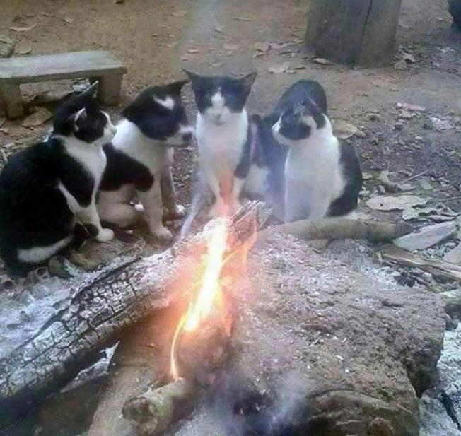 cute-similar-animals-55-612dd6117ab55__700