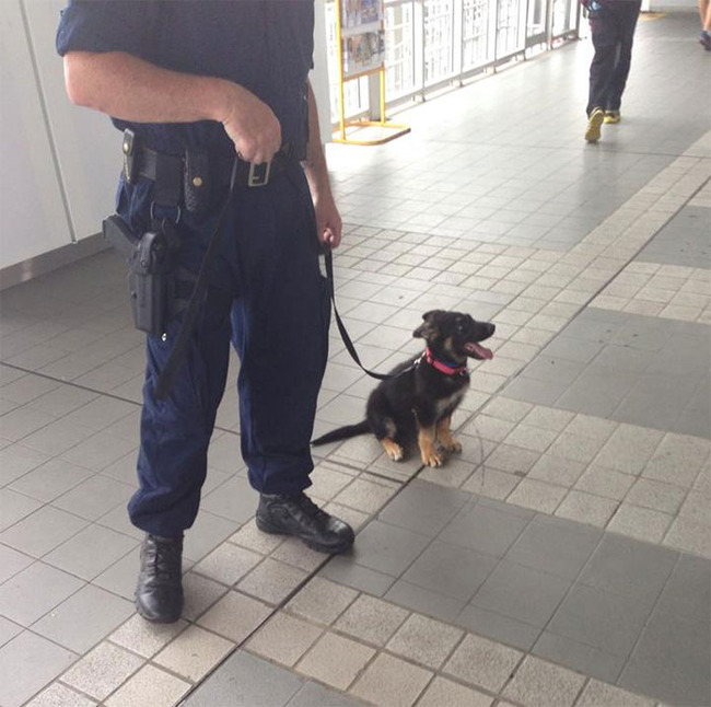 adorable-puppies-police-training-4-5f4760d21d6b2__700