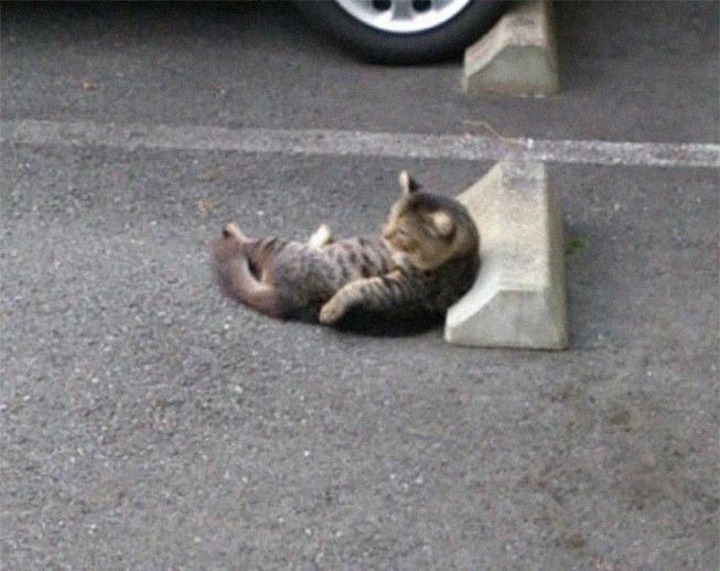 cats-sleeping-parking-lot-curves-5f215bf0eee55__700