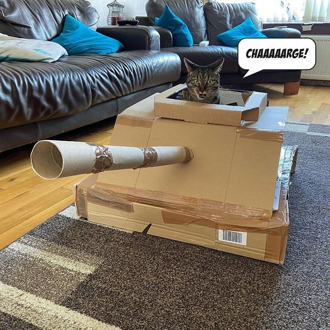 cat-tank-5eaa73caa5e77__700