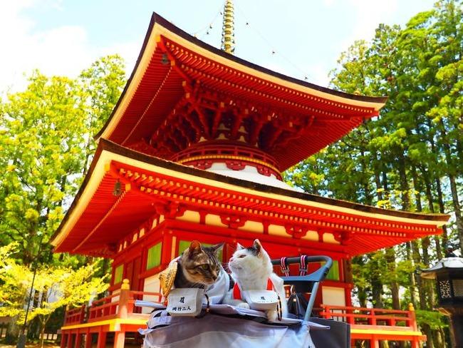 cats-anime-costumes-yagyouneko-japan-5f48f4edaa7f7__700