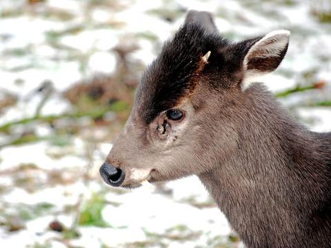 jelonek-zoo-wroclaw