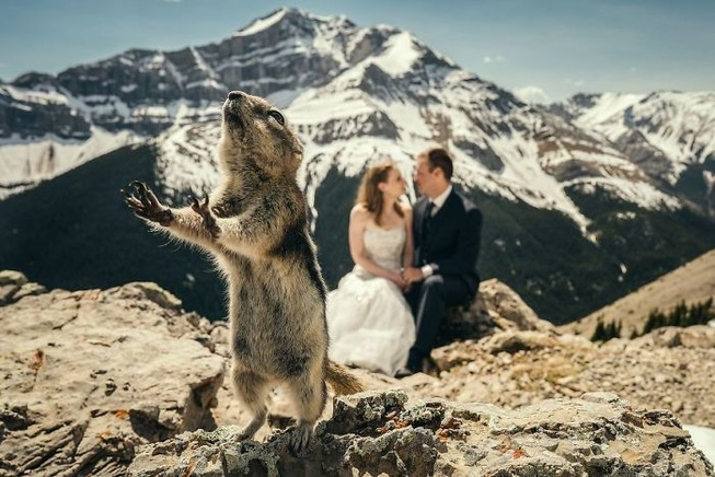 bear-photobombs-wedding-5b9a077622a01__700