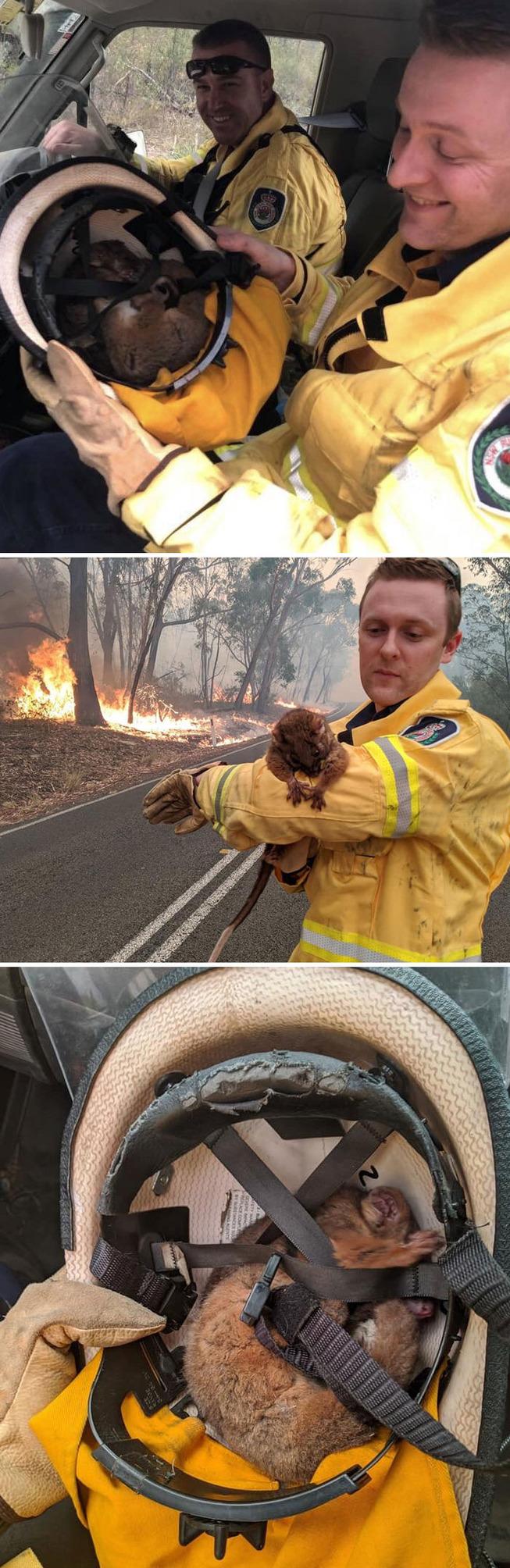 australia-fires-photos-29-5e13019aef27e__700
