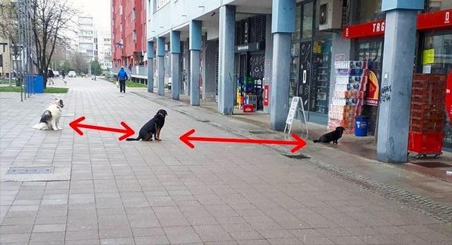 funny-animals-social-distancing-2-5e96f0d8032ba__700 (1)