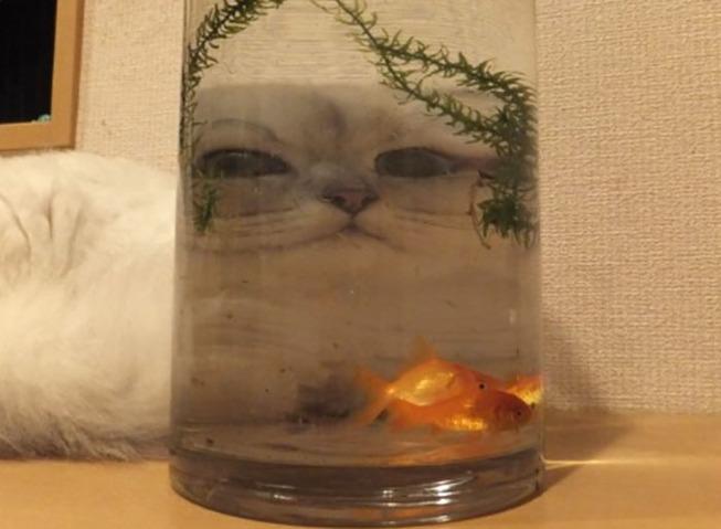 pets-animals-behind-glasses-5-5f2d1bd716c3e__700