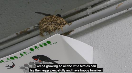 フン受け ツバメの巣 海外の反応