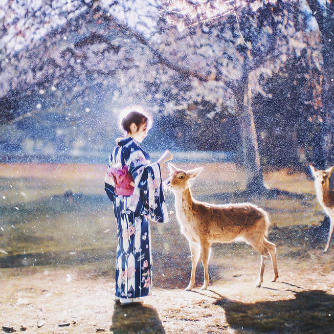Lost-in-Kyoto-and-the-sakura-blossom-59101a87289a3__880