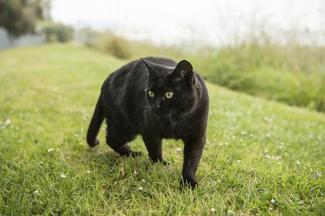 black-cats-unlucky-orig