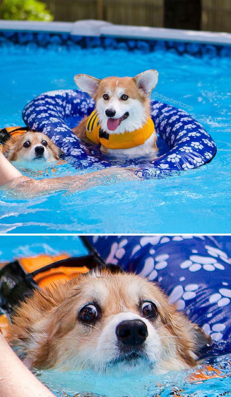 funny-corgis-cute-dogs-65-5b0577b81192e__700