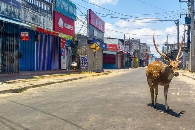 animals-roam-streets-coronavirus-quarantine-5e8b1fd215ff1__700