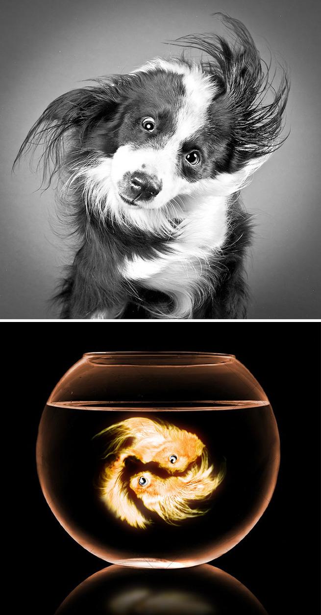 funny-photoshop-battle-winners-101-5a5ca05dbbf3e__700