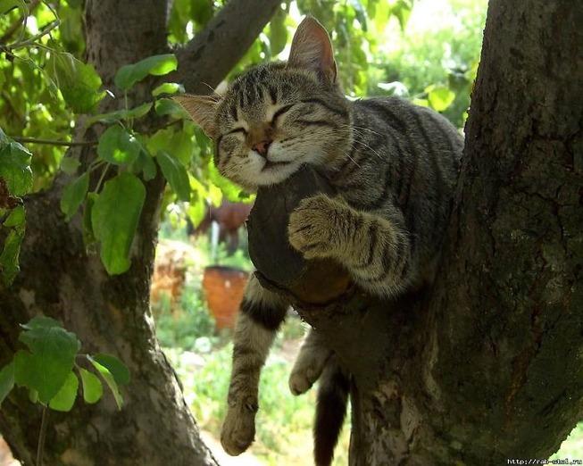 sleeping-cats-in-trees-3-5f117051eda28__700