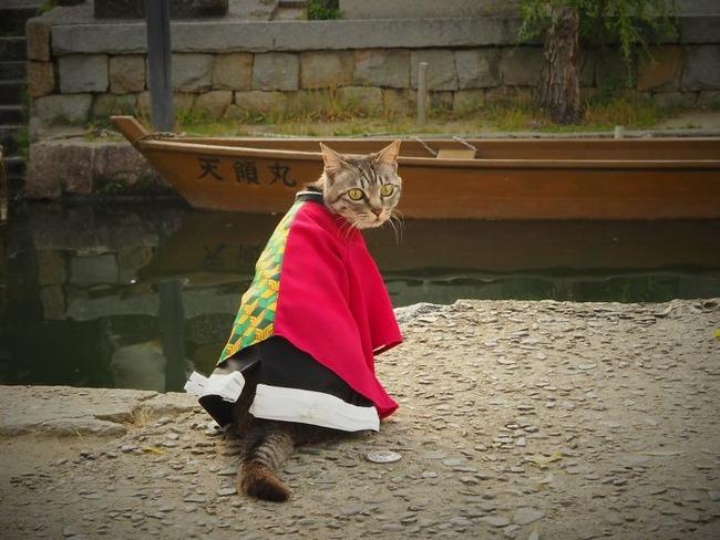 cats-anime-costumes-yagyouneko-japan-5f48cc6301c9d__700