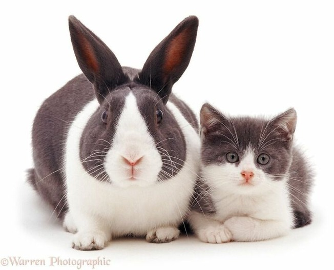 cute-similar-animals-205-611cd7af139a6__700