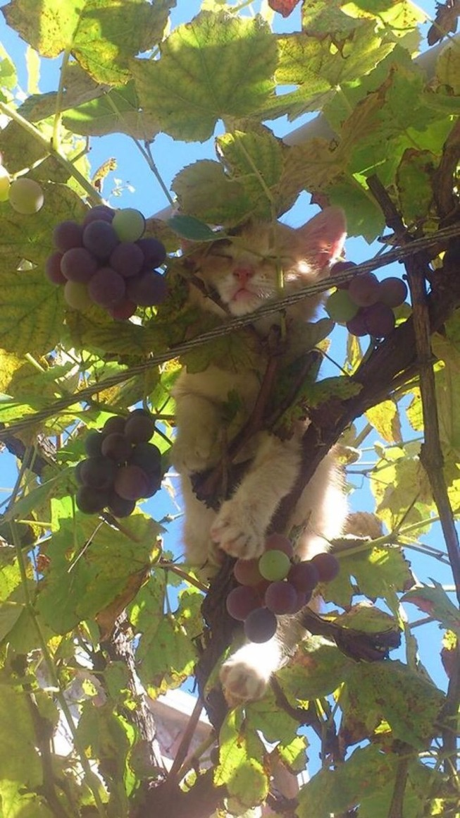 sleeping-cats-in-trees-4-5f11705418527__700