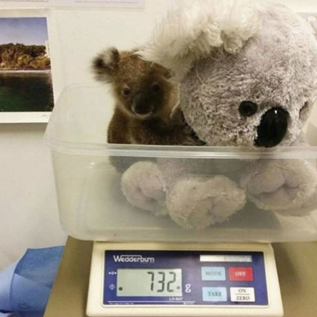 animals-being-weighted-5ee9cfa7d06d6__700