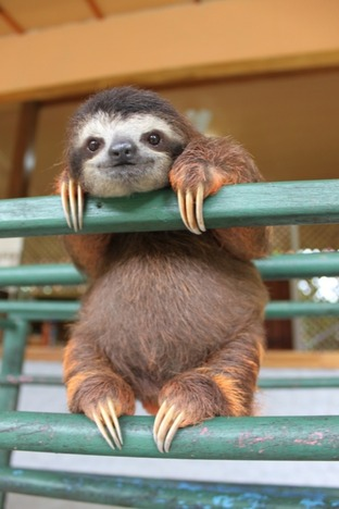 l-the-happiest-baby-sloth