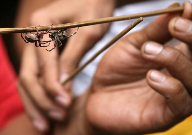 spider-fighting_1806589i