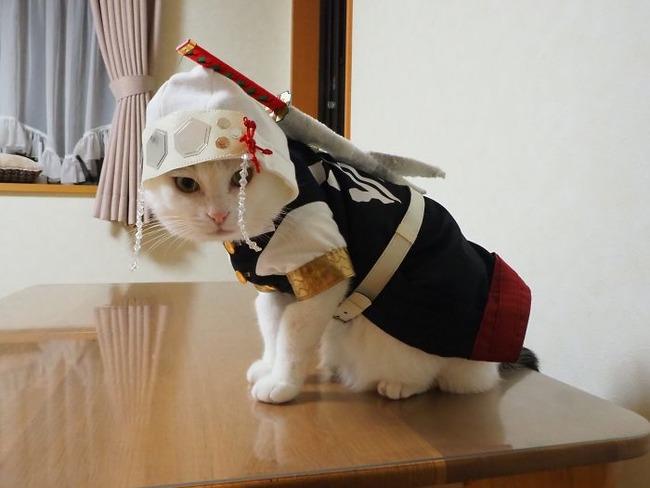 cats-anime-costumes-yagyouneko-japan-5f48cca26e80b__700