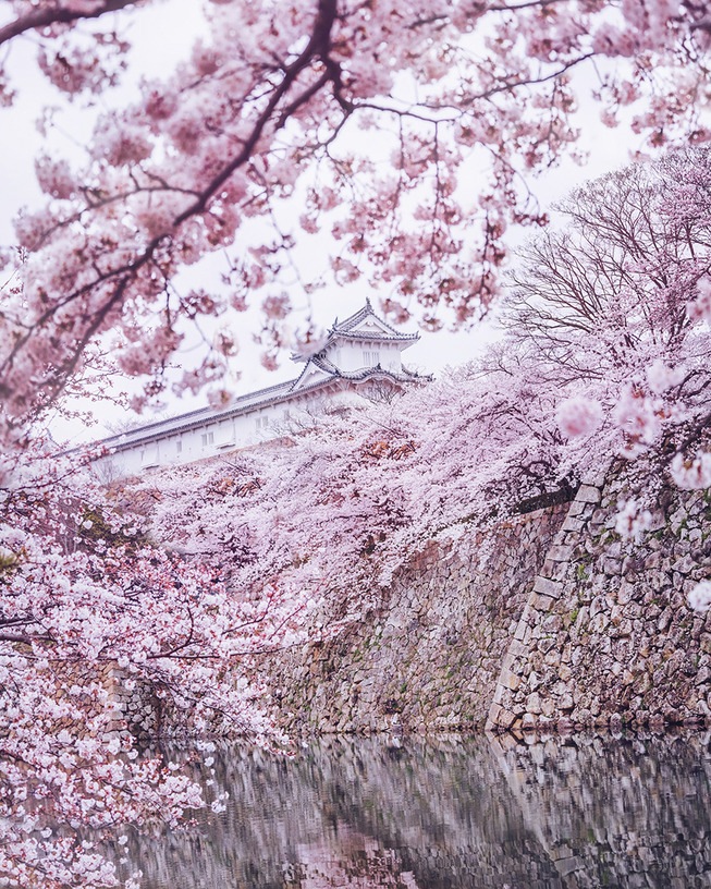 Lost-in-Kyoto-and-the-sakura-blossom-59101a6d0b357__880