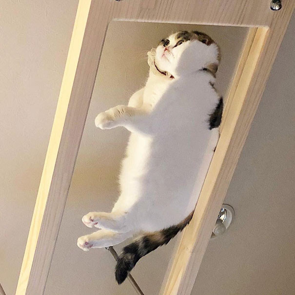 funny-cats-on-glass-1-5c35b8f188a4b__605 (1)