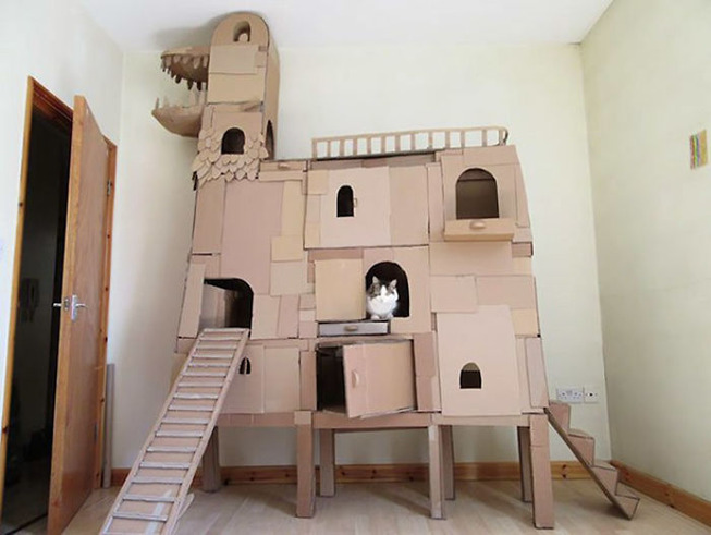 cats-cardboard-forts-3-5f2cf2cf46af2__700