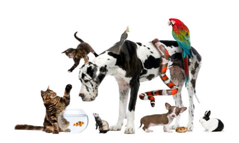 we-have-multiple-pets-can-we-still-find-a-rental1