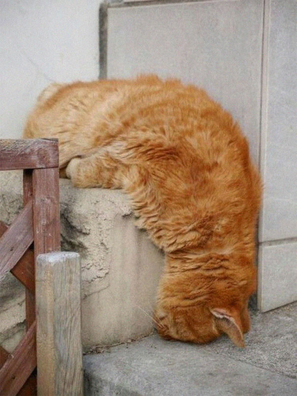 cats-sleeping-strange-places-12-5e69f5f2a2f1e__605