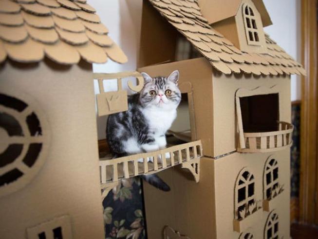 cats-cardboard-forts-20-5f2cf2eb71bcf__700